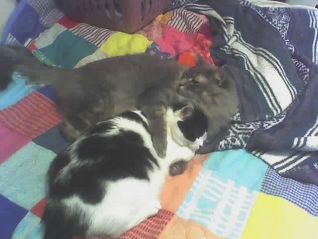 Truman and Jasmine Hug